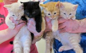 Sassy's Kittens