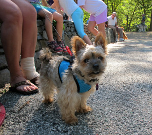 19th Annual Hound Hike