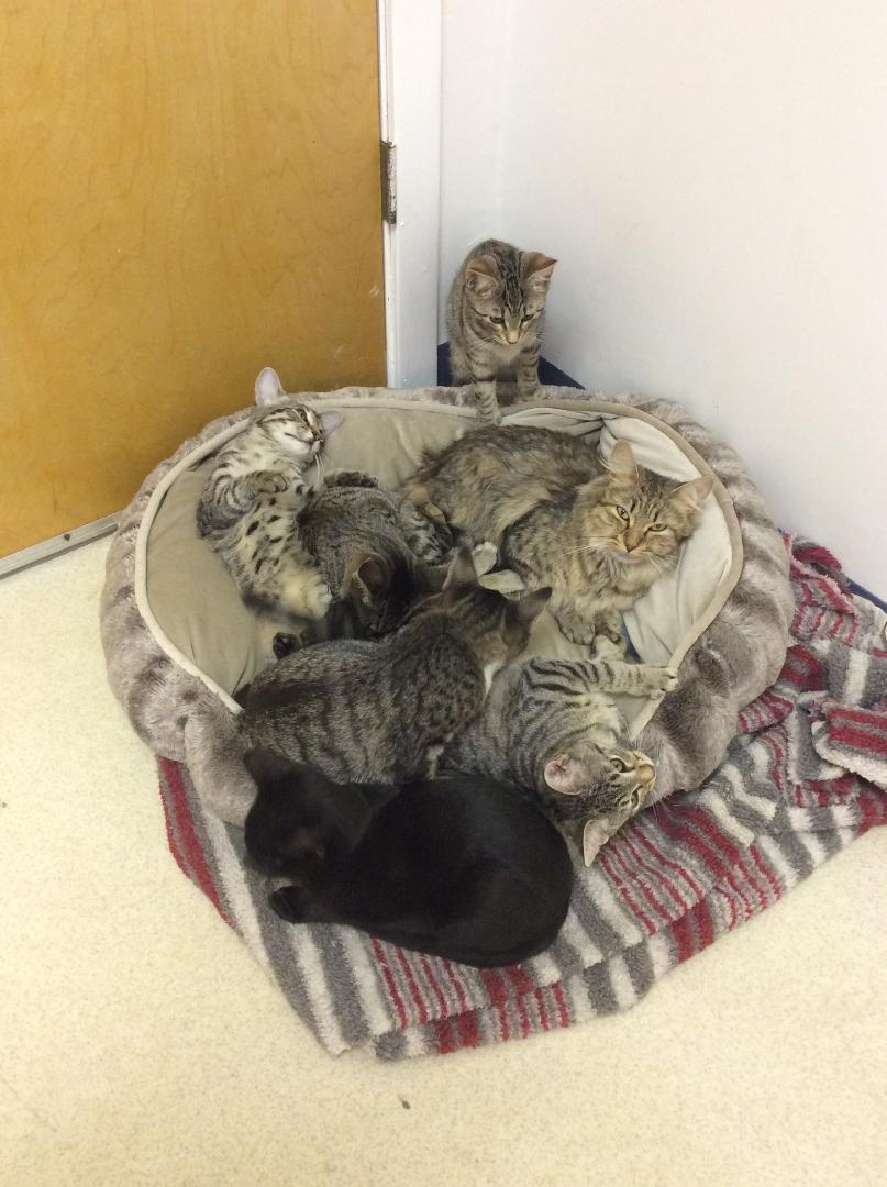 Gwyneth And Kittens