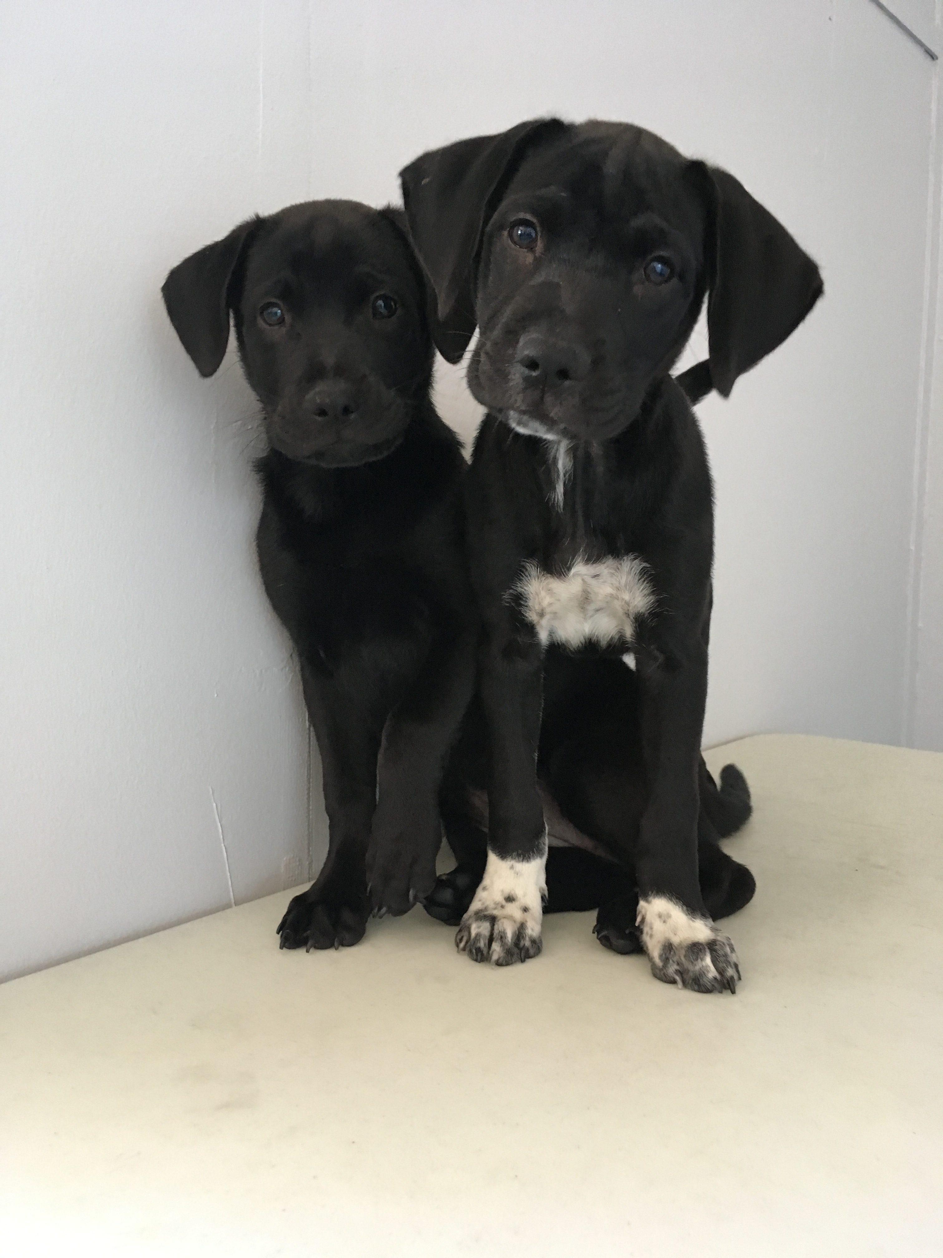 Blu And Jessie